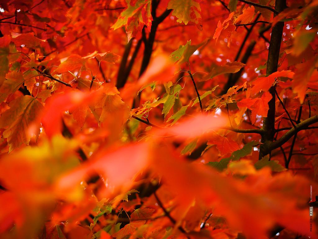 Herbstlaub probiersmahl 1400px